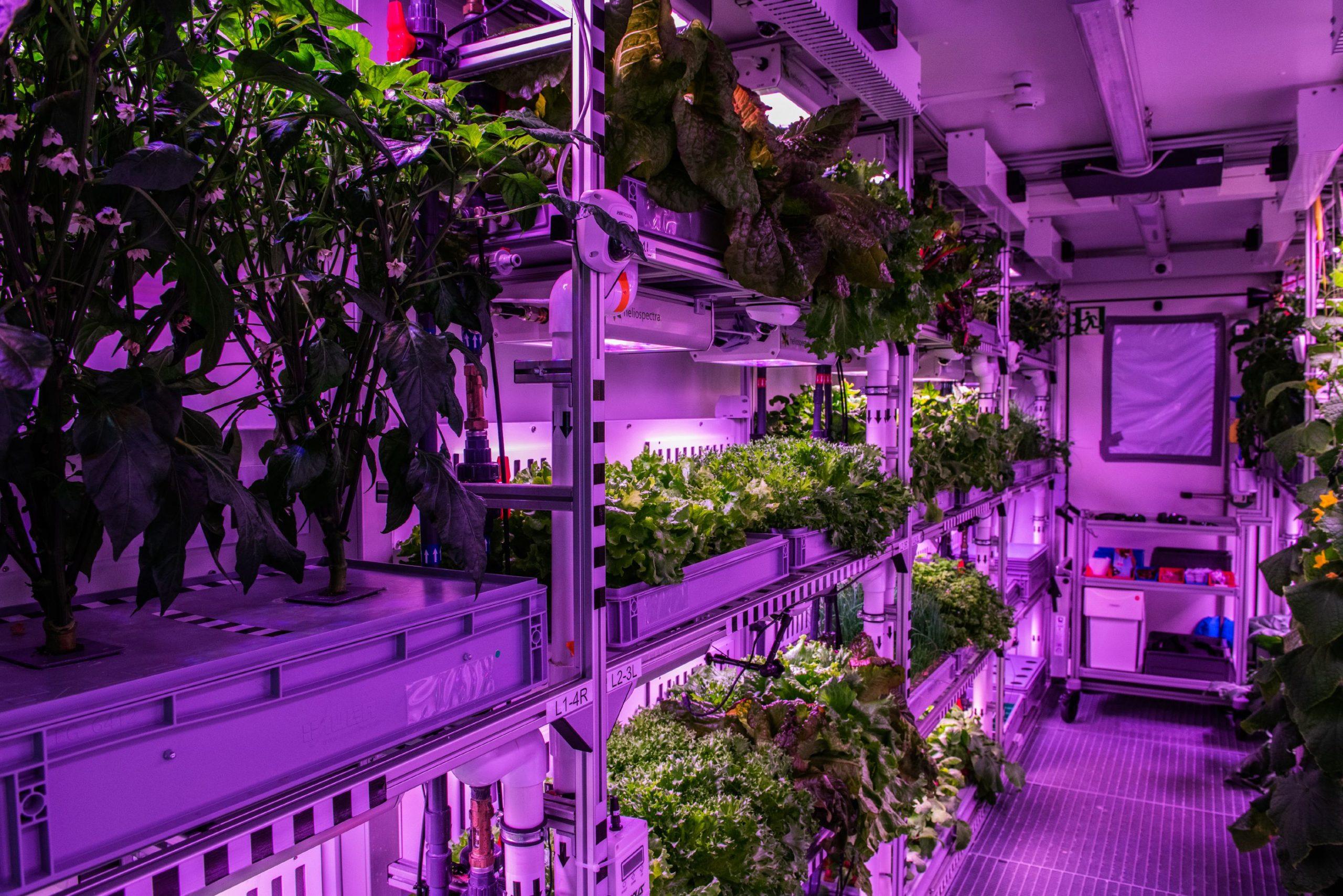 Innenaufnahme EDEN ISS mit Pflanzen